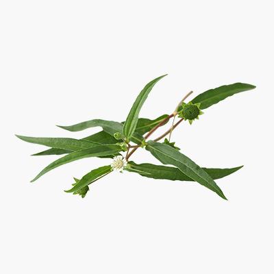 best hair oil for men | natural hair oil of supersmelly | best hair oil for women | Supersmelly bhringraj hair oil