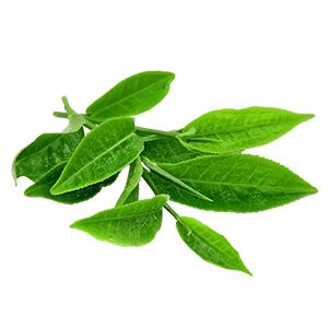 Green tea | Super Smelly Anti-Acne Regime